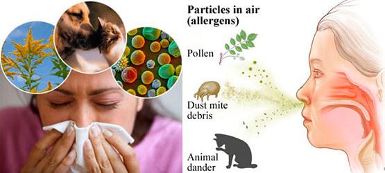 allergicheskij nasmork vesnoj